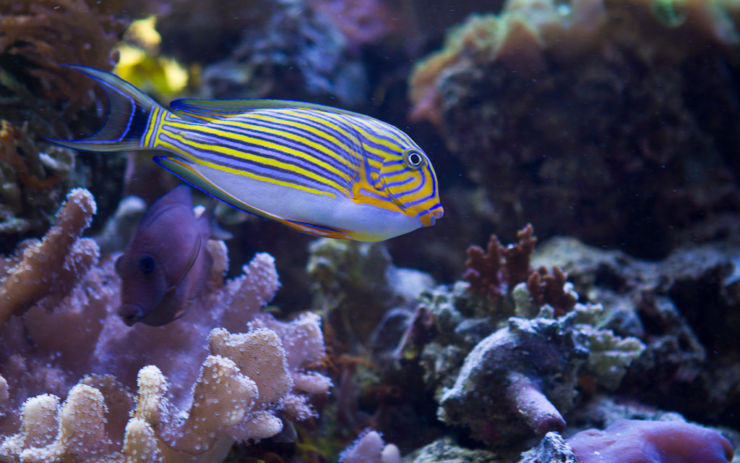 tropical fish photo