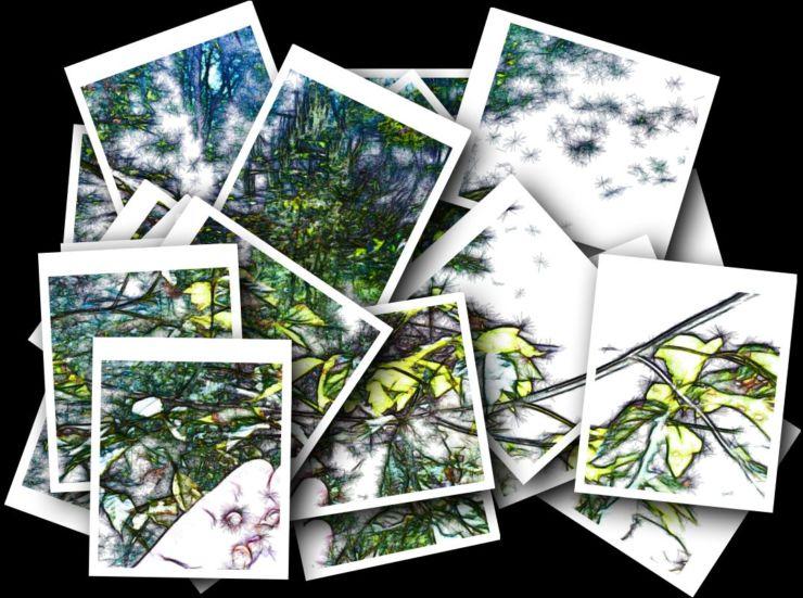 fractal nature of life
