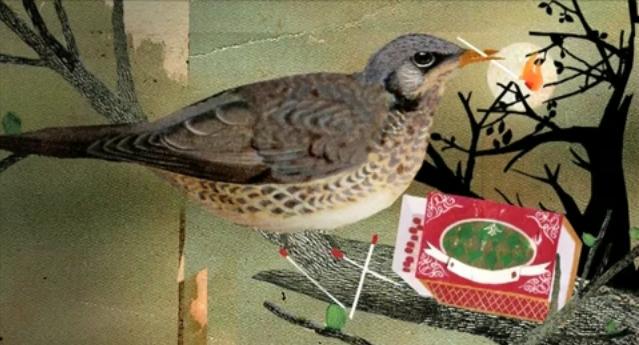 blood-middle-east-redbird