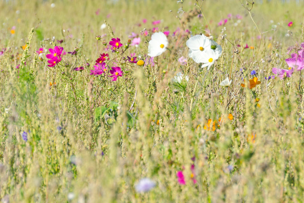 france meadow photo