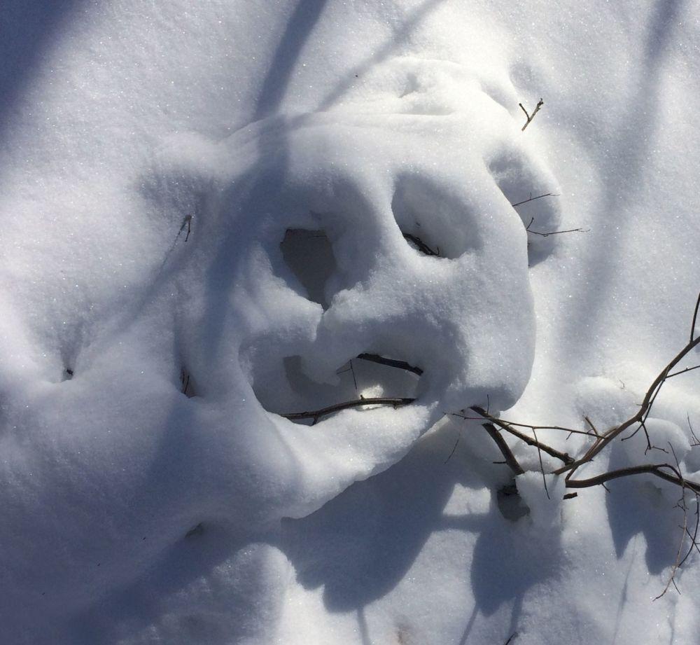 white-bear-rotated