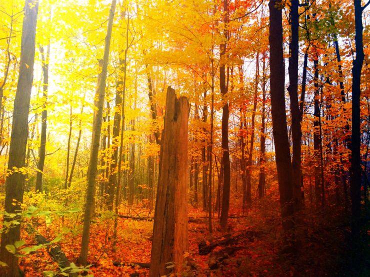 dead-tree-in-bush4