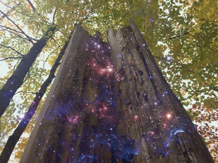 old-dead-tree-bush-stars