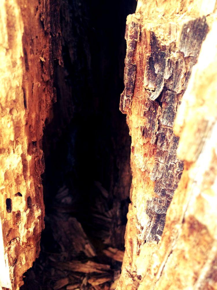 old-dead-tree-inside